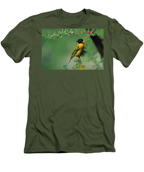 Black-headed Weaver Men's T-Shirt (Athletic Fit)