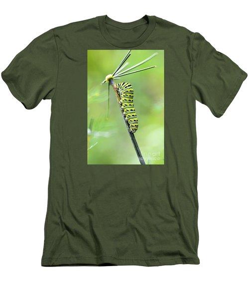 Black Swallowtail Caterpillar Men's T-Shirt (Slim Fit) by Debbie Green