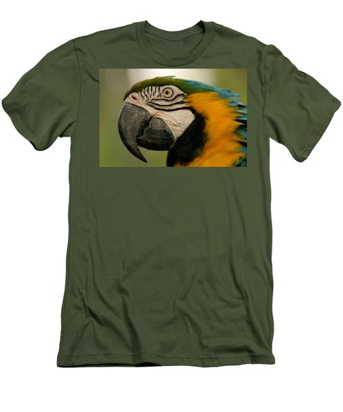 Blue Gold Macaw South America Men's T-Shirt (Slim Fit) by Ralph A  Ledergerber-Photography
