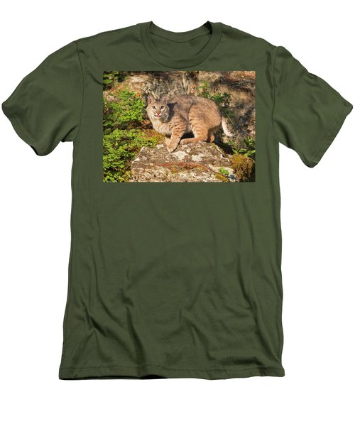 Bobcat On Rock With Tongue Out Men's T-Shirt (Athletic Fit)
