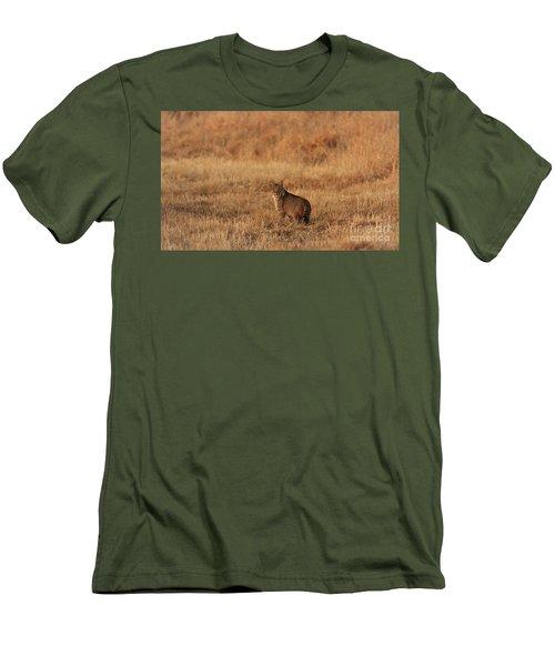 Bobcat Men's T-Shirt (Athletic Fit)