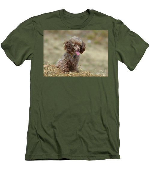 Brown Toy Poodle On Bail Of Hay Men's T-Shirt (Athletic Fit)