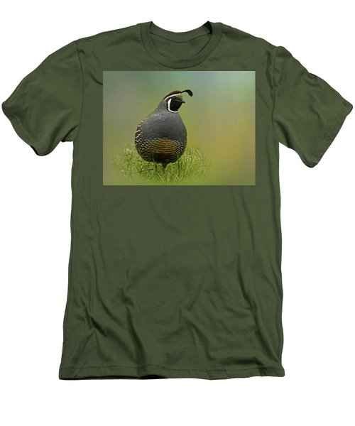 California Quail - 365-42 Men's T-Shirt (Slim Fit) by Inge Riis McDonald