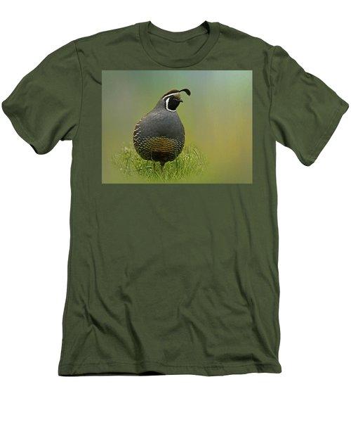 California Quail - 365-42 Men's T-Shirt (Slim Fit)