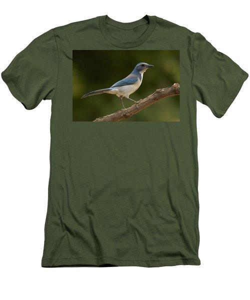 California Scrub Jay Men's T-Shirt (Slim Fit) by Doug Herr