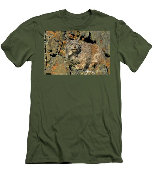 Men's T-Shirt (Slim Fit) featuring the photograph Canadian Lynx On Lichen-covered Cliff Endangered Species by Dave Welling