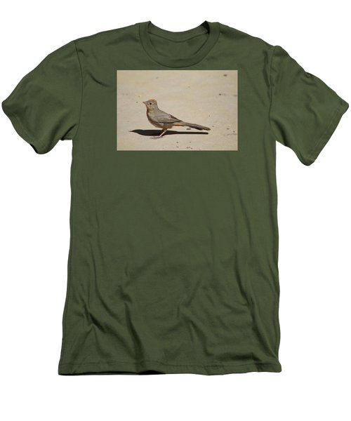 Canyon Towhee Begs Men's T-Shirt (Athletic Fit)