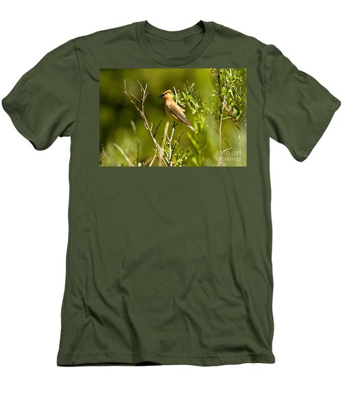 Cedar Waxwing At Glacier Men's T-Shirt (Slim Fit) by Adam Jewell