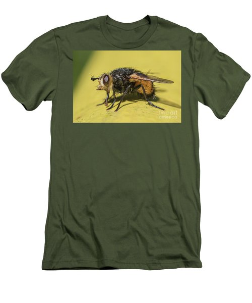 Close Up - Tachinid Fly - Nowickia Ferox Men's T-Shirt (Slim Fit) by Jivko Nakev