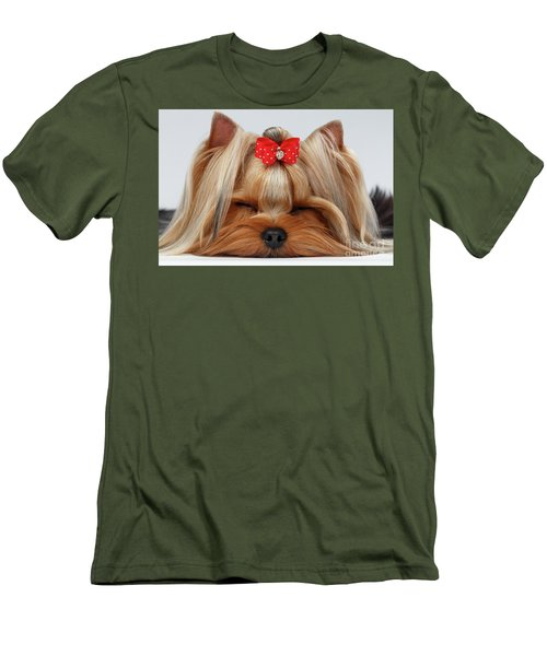 Closeup Yorkshire Terrier Dog With Closed Eyes Lying On White  Men's T-Shirt (Slim Fit) by Sergey Taran