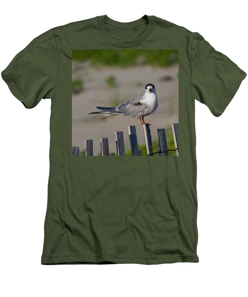 Common Tern Men's T-Shirt (Athletic Fit)