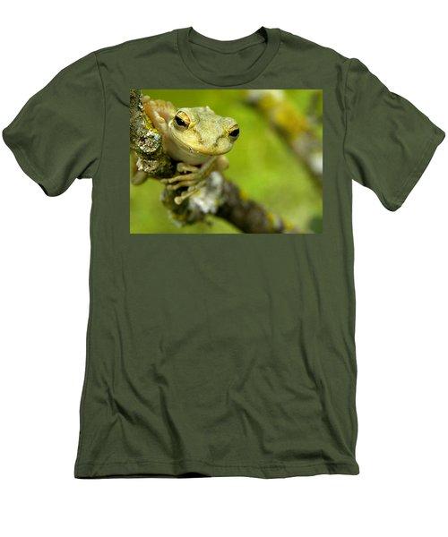 Cuban Tree Frog 000 Men's T-Shirt (Slim Fit) by Chris Mercer