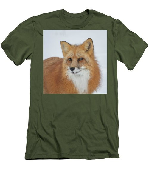 Curious Fox Men's T-Shirt (Slim Fit) by Jack Bell