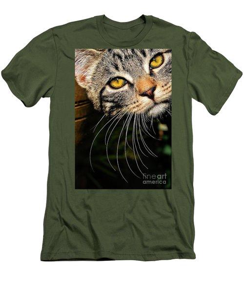 Curious Kitten Men's T-Shirt (Slim Fit) by Meirion Matthias