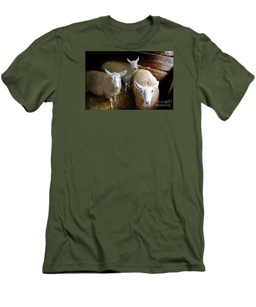 Curious Sheep Men's T-Shirt (Slim Fit) by Kevin Fortier