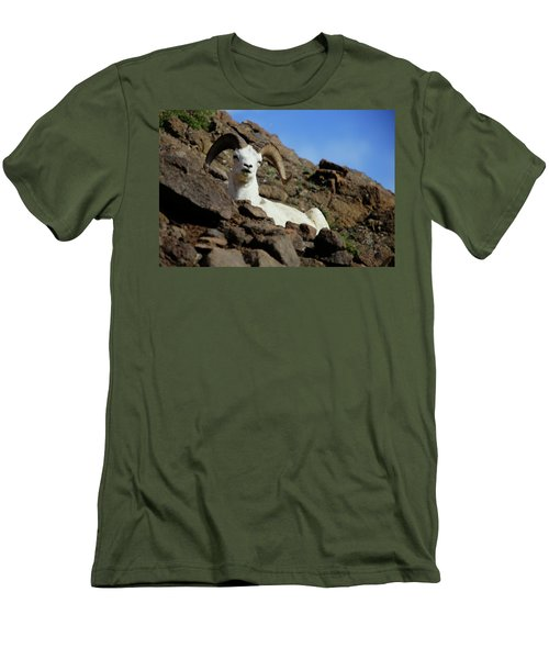 Dall Sheep Men's T-Shirt (Athletic Fit)