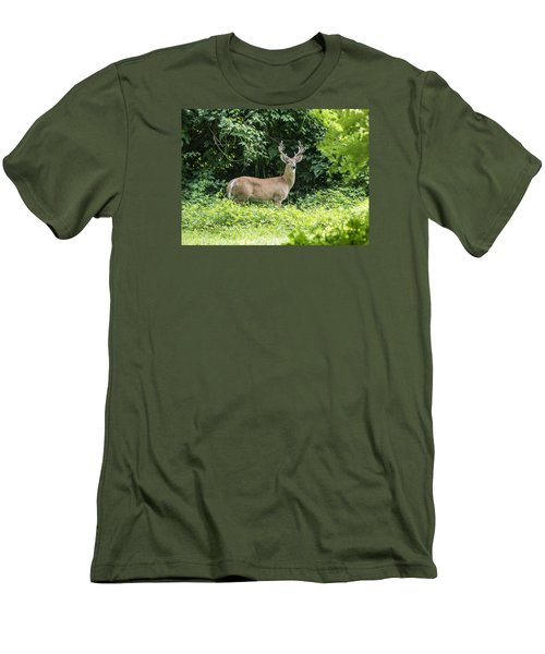 Eastern White Tail Deer Men's T-Shirt (Athletic Fit)