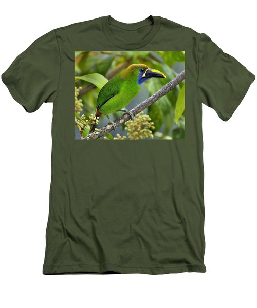 Emerald Toucanet Men's T-Shirt (Athletic Fit)