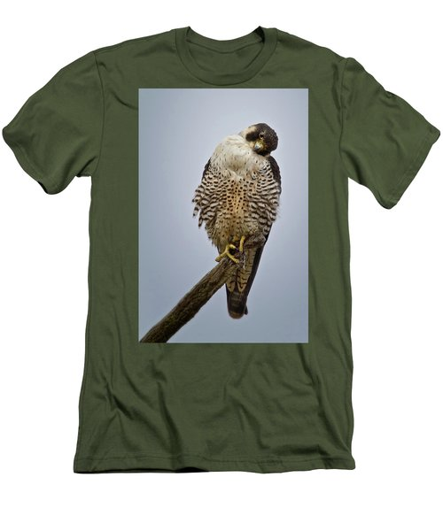 Falcon With Cocked Head Men's T-Shirt (Athletic Fit)