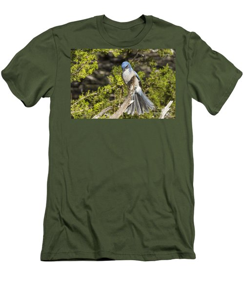 Fanning Scrub Jay Men's T-Shirt (Athletic Fit)