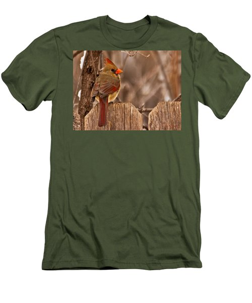Female Cardinal On The Fence Men's T-Shirt (Athletic Fit)