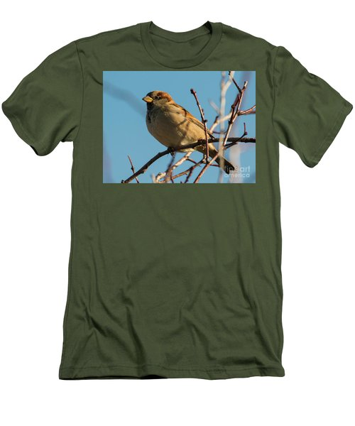 Female House Sparrow Men's T-Shirt (Slim Fit) by Mike Dawson