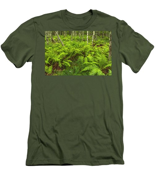 Ferns And Birch In Soft Light Men's T-Shirt (Athletic Fit)