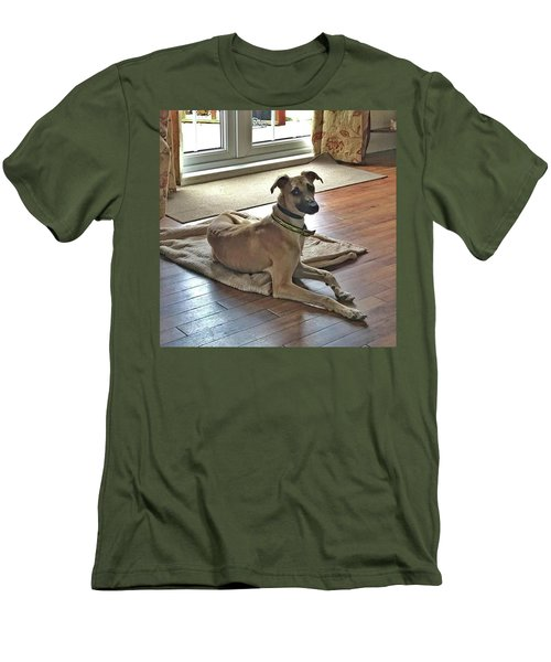 Finly - Ava The Saluki's New Companion Men's T-Shirt (Athletic Fit)