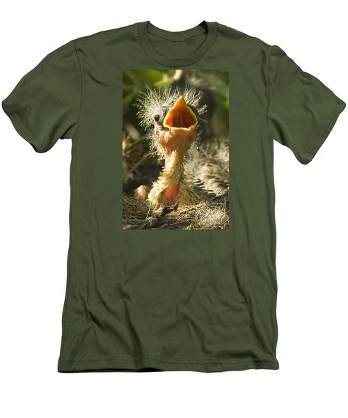 Fledgling Yellow Warbler Men's T-Shirt (Athletic Fit)