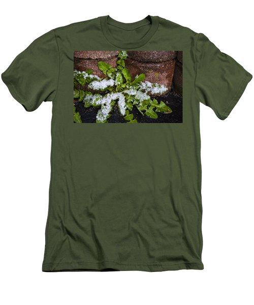 Frosted Dandelion Leaves Men's T-Shirt (Slim Fit) by Deborah Smolinske