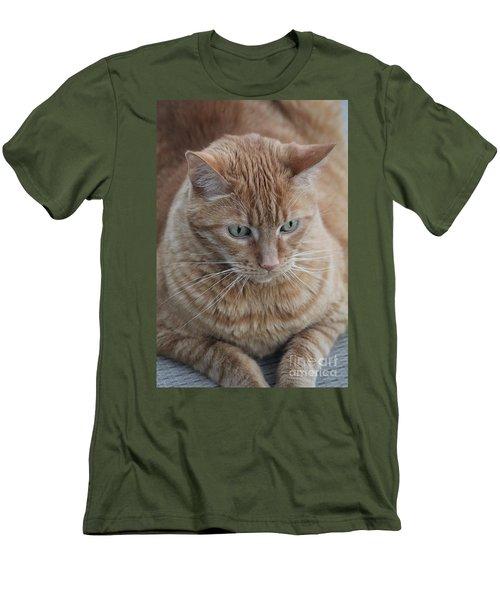 Ginger Cat Men's T-Shirt (Athletic Fit)