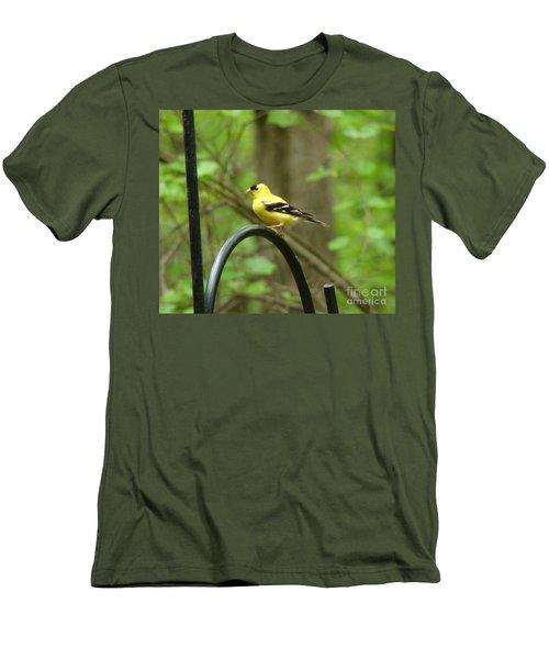Golden Finch Men's T-Shirt (Slim Fit) by Rand Herron