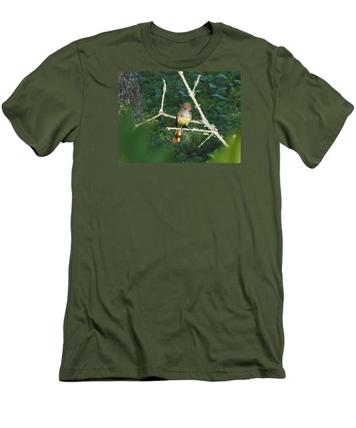 Great Crested Flycatcher Men's T-Shirt (Athletic Fit)