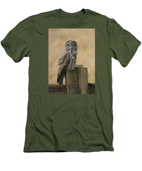 Great Gray Owl Men's T-Shirt (Slim Fit) by Doug Herr