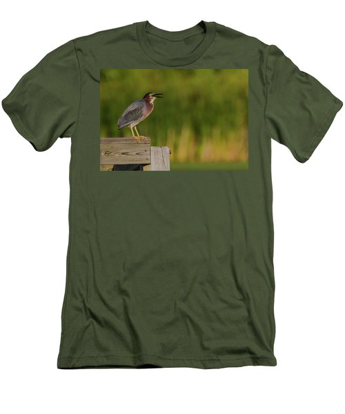 Green Heron Evening Men's T-Shirt (Athletic Fit)