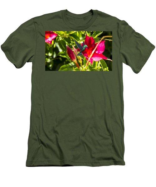 Green Hummingbird Men's T-Shirt (Slim Fit) by Pat Cook