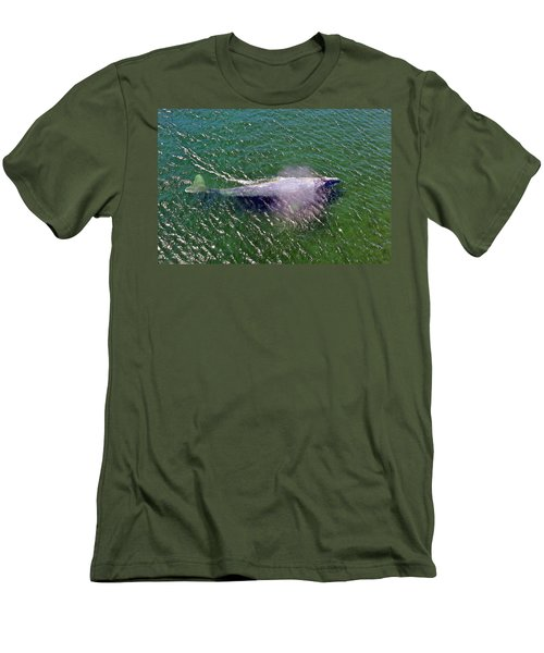Grey Whale Men's T-Shirt (Athletic Fit)
