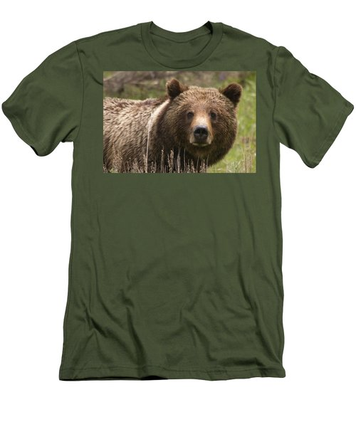 Grizzly Portrait Men's T-Shirt (Athletic Fit)