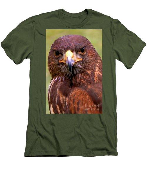 Harris Hawk Portriat Men's T-Shirt (Slim Fit)