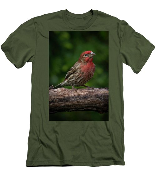 House Finch Men's T-Shirt (Slim Fit) by Kenneth Cole