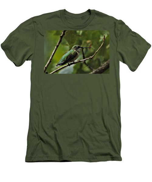 Hummingbird On Branch Men's T-Shirt (Athletic Fit)