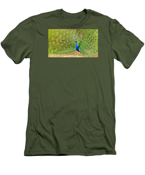 Indian Peacock Men's T-Shirt (Slim Fit) by Dan Miller