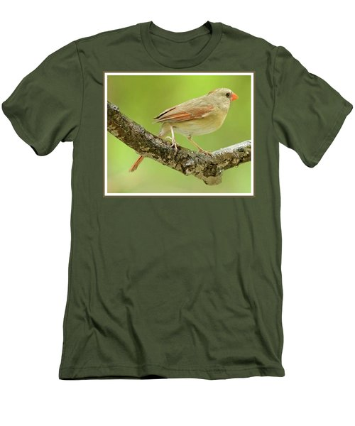Juvenile, Female Cardinal, Animal Portrait Men's T-Shirt (Slim Fit) by A Gurmankin