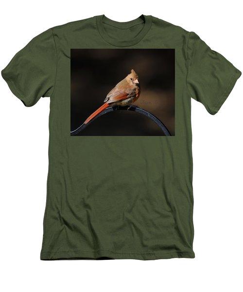 Juvenile Male Cardinal Men's T-Shirt (Slim Fit) by Diane Giurco