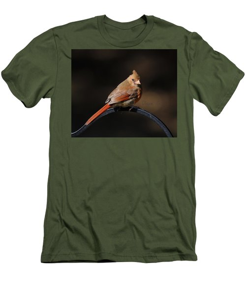 Juvenile Male Cardinal Men's T-Shirt (Athletic Fit)