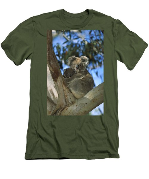 Koala Phascolarctos Cinereus Mother Men's T-Shirt (Slim Fit) by Konrad Wothe