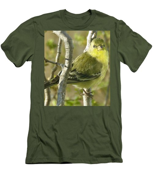 Lesser Goldfinch 1 Men's T-Shirt (Athletic Fit)