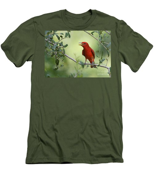 Male Summer Tanager Men's T-Shirt (Athletic Fit)
