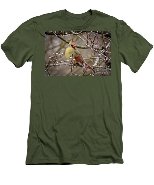 Men's T-Shirt (Slim Fit) featuring the photograph Mrs Cardinal II by Douglas Stucky