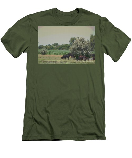 Nebraska Farm Life - Black Cows Grazing Men's T-Shirt (Athletic Fit)